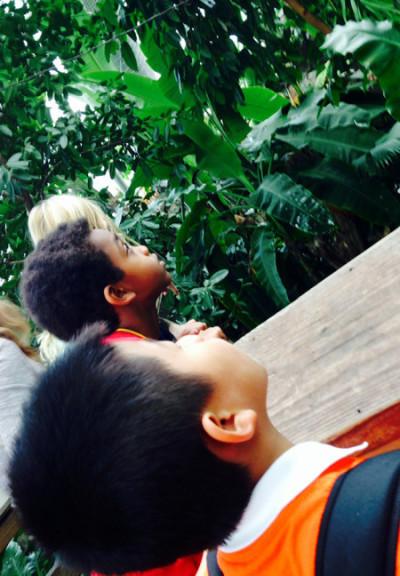 DC ES Discovery Aquarium Field Trip Jungle
